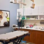 Animal Emergency & Specialty Premier Facility