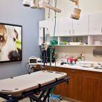 Animal Emergency & Specialty Premier Facility