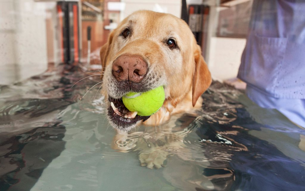 Advanced Veterinary Hydrotherapy at Animal Emergency & Specialty