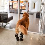 Animal Emergency & Specialty Rehabilitation Services