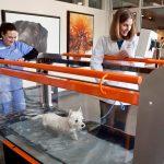 Canine Veterinary Rehabilitation at Animal Emergency & Specialty