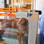 Animal Emergency & Specialty Canine Rehabilitation Services