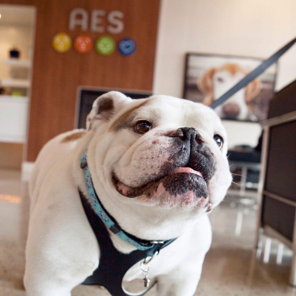 Wilson, Animal Emergency & Specialty Mascot