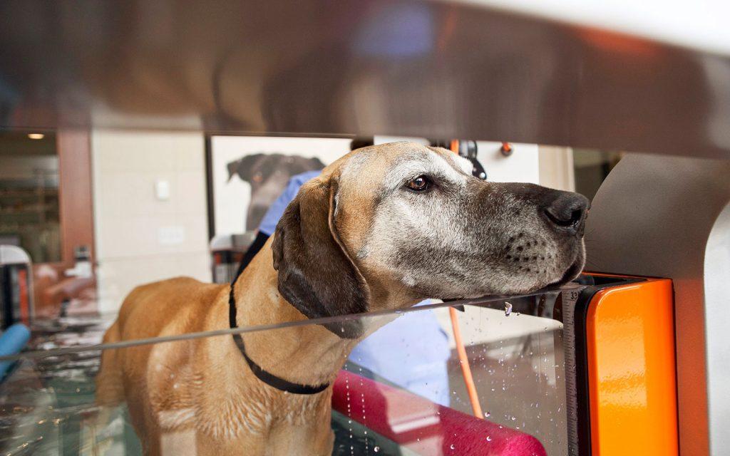 Veterinary Rehabilitation at Animal Emergency & Specialty