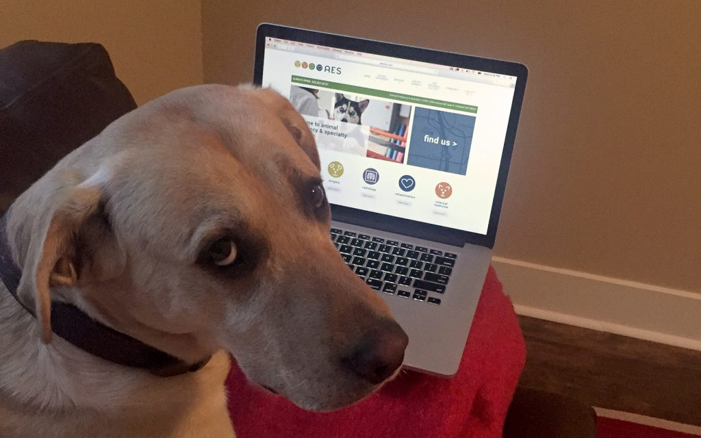 Wilson approves the new AES Website!