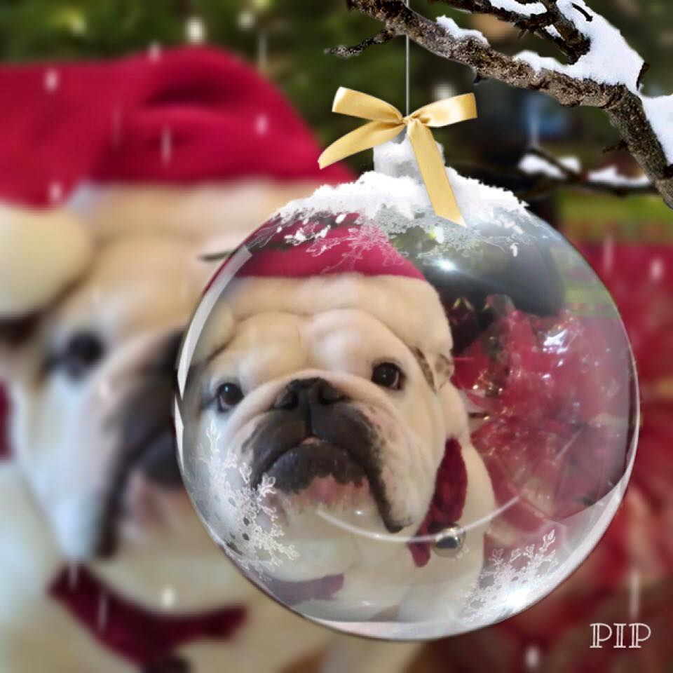 Wilson Loves Christmas!