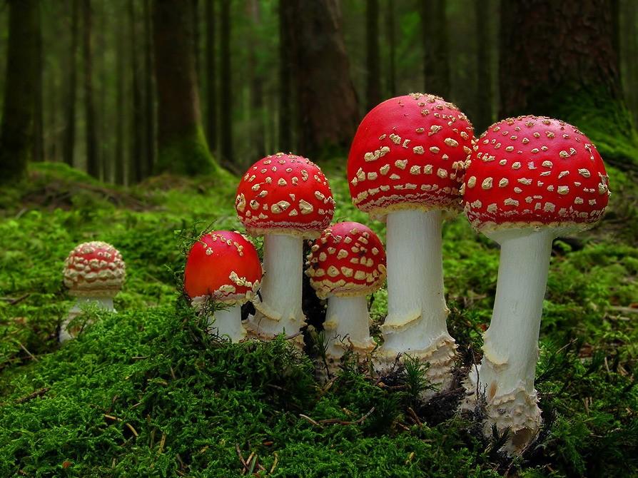 Beautiful Mushrooms May Be Deadly